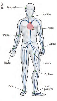 Puntos del cuerpo para la medición del pulso