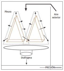 Gradiente de presiones en la ventilación durante la fase inspiratoria
