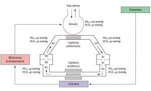 Presiones de los gases a distintos niveles y circuito de perfusión