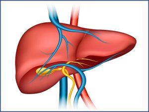 trasplante-hepatico